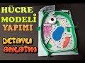 Hücre Modeli Yapımı (bitki hücresi) / CELL MODEL