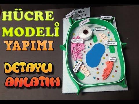 Hücre Modellemesi Yapıyoruz👨🔬👩🔬 #DNY