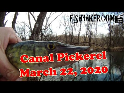 Pennsylvania Canal Pickerel Fishing - 3/22/20
