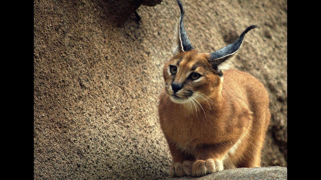 Редкие порода котов