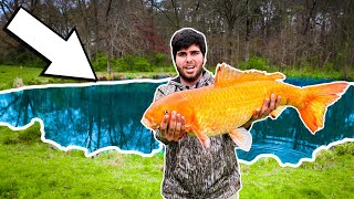 We Caught a $20,000 Fish IN A PUDDLE!