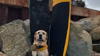 Surfing Shenanigans
