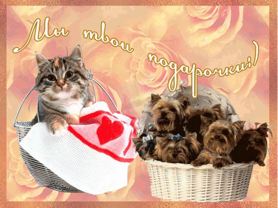 Картинки, открытка с днем рождения с котенком и щенком