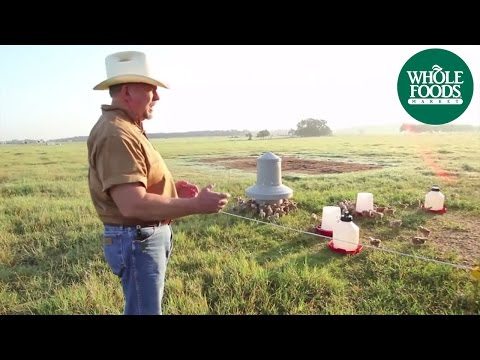 White Oak Pastures presents Pastured Raised Chicken | Meet the Ranchers | Whole Foods Market