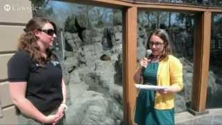 Hangout with Grizzly Bears at the Central Park Zoo, Take 2