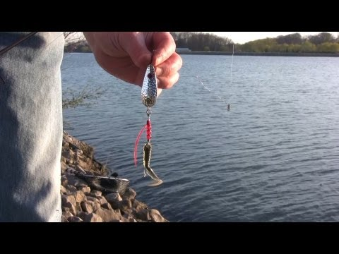 Shore Fishing Tips for Pike