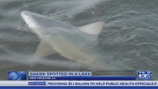 Shark spotted in lake in Louisiana