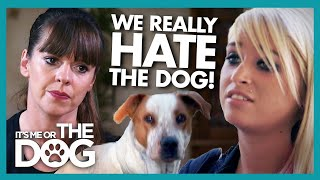 Unhappy Family Have Been Attempting to Get Rid of Dog 'Since Day One' | It's Me or The Dog