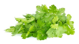 Benefits of Cilantro