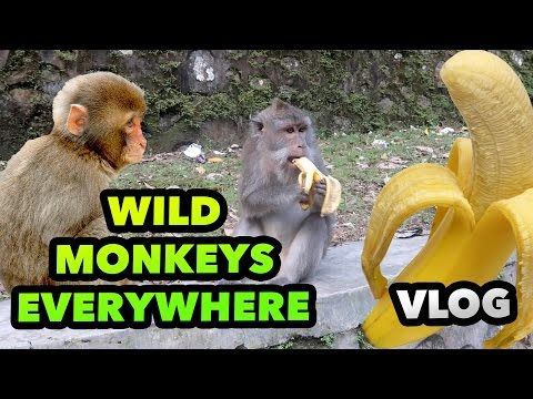 GIVING BANANAS TO WILD MACAQUES - LOMBOK TRAVEL GUIDE BLOG #51