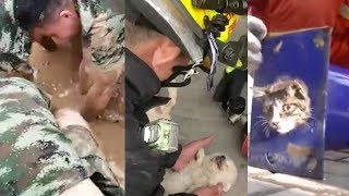 Firefighters rescue both people and animals from danger