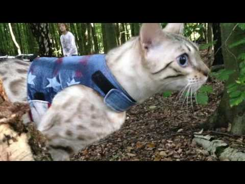 How to fit a Cat Walking Jacket/Harness (Butterfly Cat Jacket)