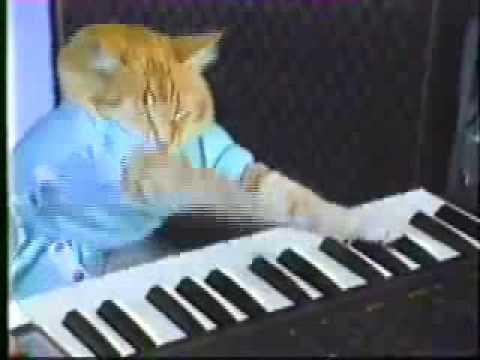 PLAY HER OFF.. KEYBOARD CAT, IS ANYONE MINDING THE...