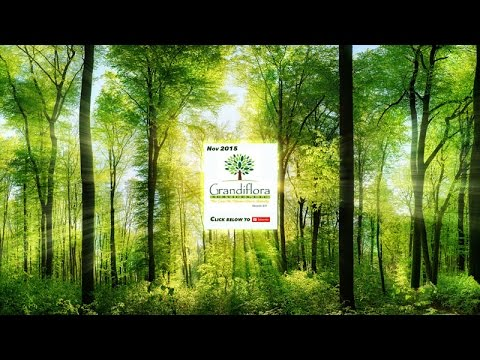Tree Care The Woodlands Conroe Spring TX - Best Arborist in Montgomery County (281) 936-TREE)