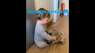 r/aww a Cute, adorable, funny, and heart warming animals, dogs, pets, and babies!
