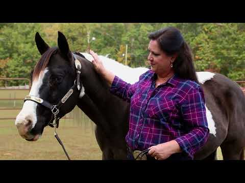 Prascend® (pergolide Tablets) Horse Owner Stories