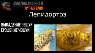 Бактериальные болезни у аквариумной рыбы