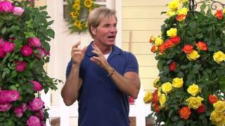 Cottage Farms Color Sizzle Climbing Rose Duo with Dan Hughes