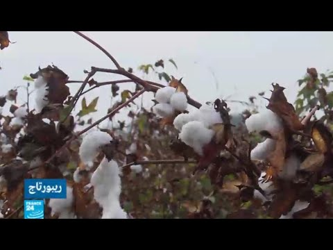 خطة للنهوض بقطاع -الذهب الأبيض- المصري  - 17:22-2018 / 1 / 15