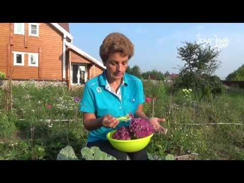 Как вкусно пожарить цветную капусту на сковороде: 6