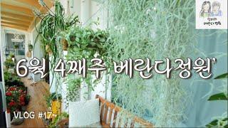 [엄마의 베란다정원(Vlog) #17] 6월 4째주 베…
