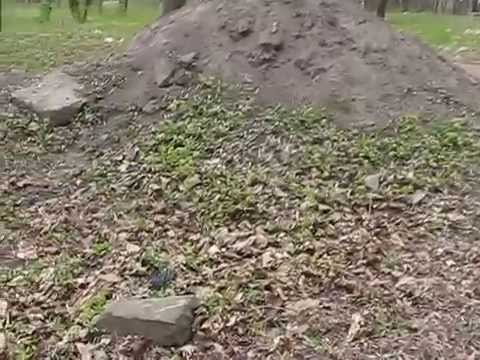 Old Jewish cemetery in Rivne / Єврейське кладовище в Рівному (пагорб Єврейка)/