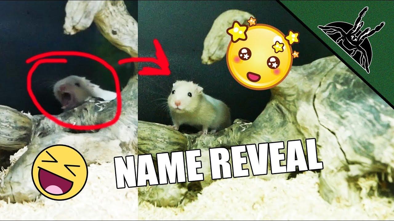 loads-of-updates-felix-hamster-centipedes-snails-waterbug