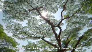 Marchez dans les pas de Jane Goodall et explorez le Parc National de Gombe en Tanzanie