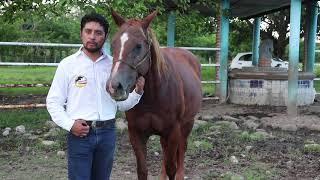 Cuidado en los Equinos // El Bramadero TV Agropecuario
