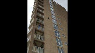 【悲鳴】アライグマがビルの9階から突然落下…一体どうなってしまうのか!?