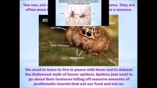 Helpful Spider Identification Bc Canada