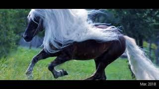 Топ:13 самых красивых и необычных лошадей