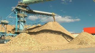 Как работает завод беленой целлюлозы в Светлогорске