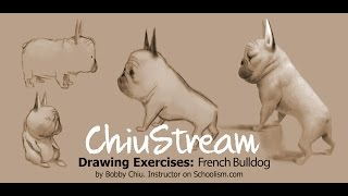 Drawing Exercises: French Bulldog
