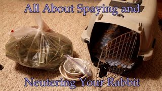 How Much Does Spaying A Dog Cost Uk