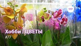 117#77 / Хобби-Цветы / 12.10.2018 - ЛЕРУА МЕРЛЕН (ТК ТРОЙКА). ОБЗОР-1