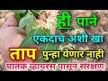 ही पाने एकदाच अशी खा ताप पुन्हा येणार नाही Tap yene gharguti upay | Fever home remedies in Marathi