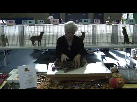 Evergreen Cat Fanciers Fall Show 2009