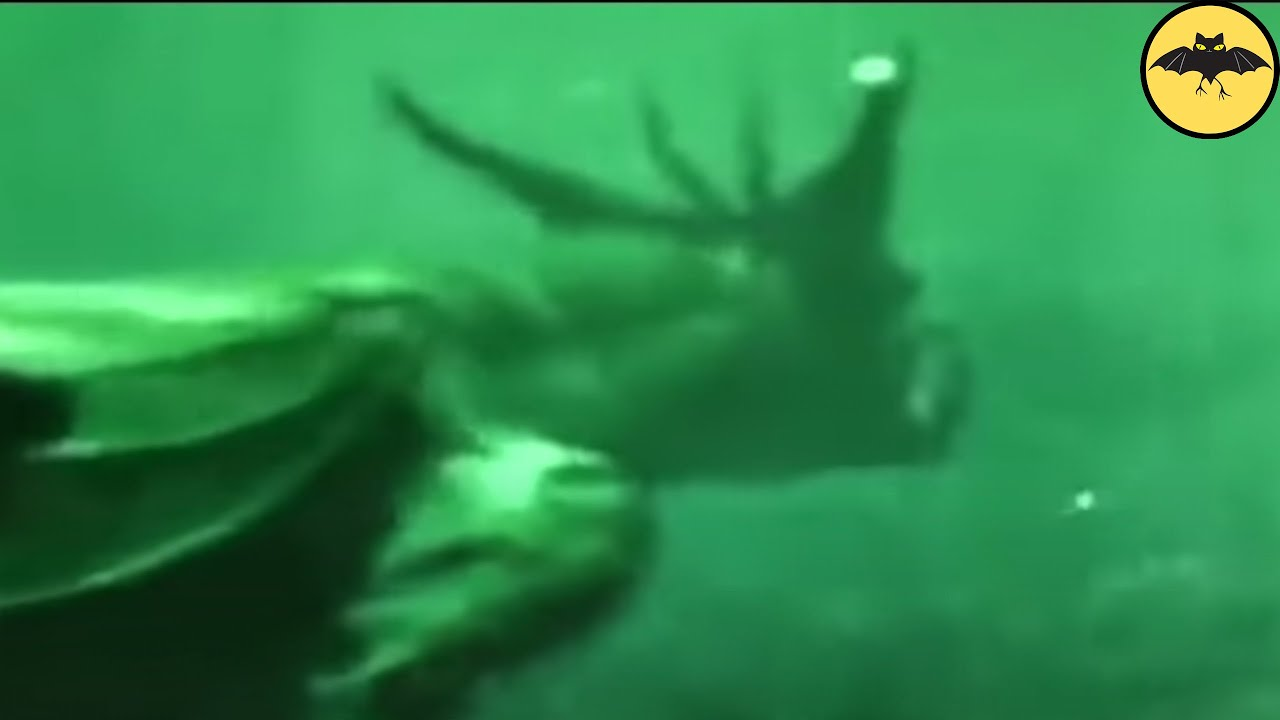 Download 6 Mysterious Underwater Creatures Caught On Tape.