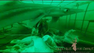 SHARK CAUGHT IN CRAB TRAP!!!! FULL VIDEO!!!! Sharks, Crabs, Flounder, Skate!!!