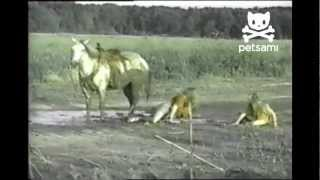 Horse dunks two girls in the mud