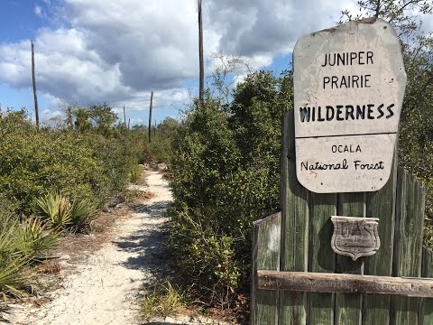 The Florida Trail - Ocala National Forest - Juniper Springs to Hidden Pond
