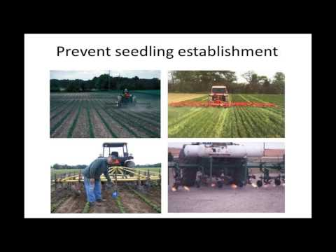 Organic Pest Management:  Weeds