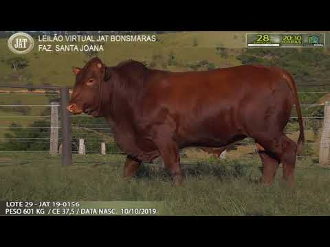 LOTE 029