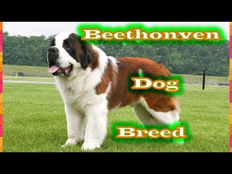Beethonven dog breed petsmart