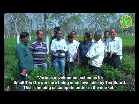 Measures to support small tea growers - Tea Board of India