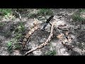 Killing Three Copperhead Snakes Within 10 Feet of Each Other +dissection (gruesome)