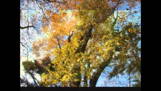 大台ケ原の紅葉、大自然を満喫して下さい。 大台ケ原は奈良県吉野郡上北...