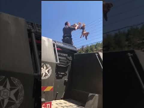 """לוחמי מג""""ב חילצו עוף דורס. צילום: דוברות המשטרה"""
