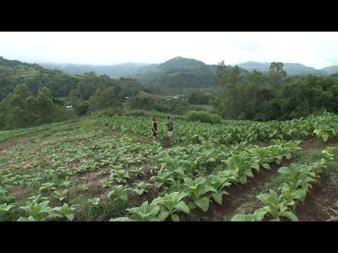Die Kolonisten - Deutschbrasilianer im Süden Brasiliens